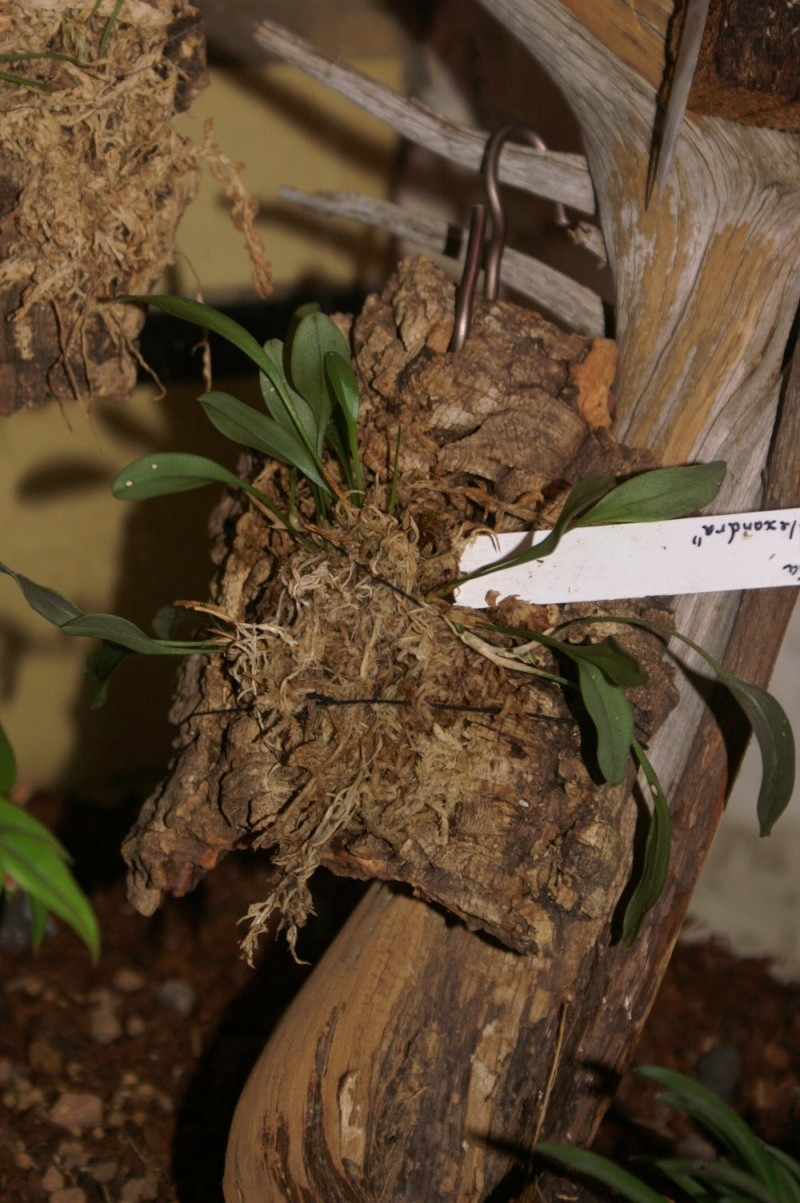 Petites folies d'Orchidays Bonsai22