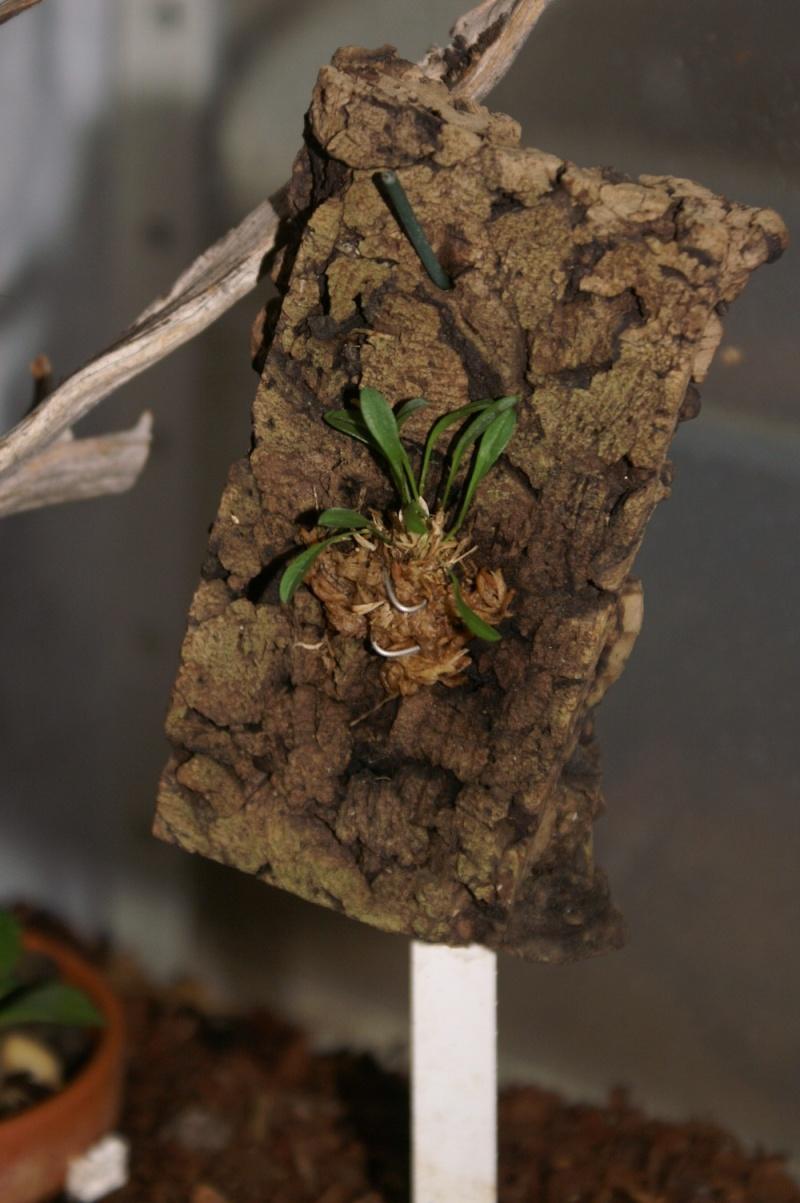 Petites folies d'Orchidays Bonsai24