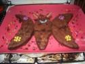 papillon - Page 3 2008-036