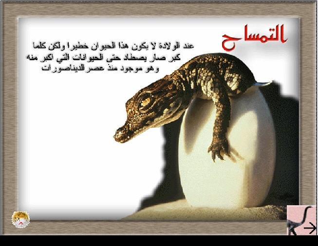 اسطوانة عالم الحيوان 000 صور جذابة و معلومات مختصرة و مفيدة Mof25_13
