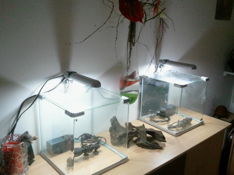 2 nanos en cours 2012-011
