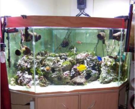 divers aqua Captur13
