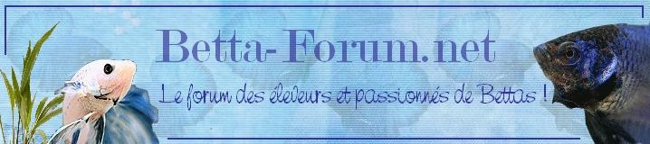 forum betta Jb-new10