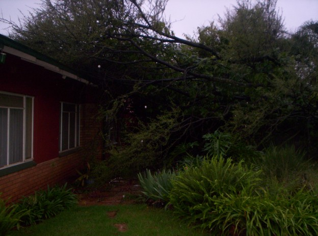 Tree attacks Warrefok's house !!! Boomhu10