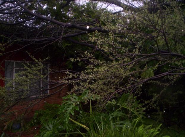 Tree attacks Warrefok's house !!! Boomhu11