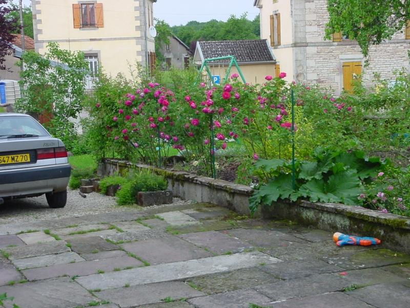 les roses de mai Dsc00112