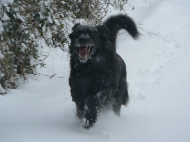 vive la neige !!  Balade39