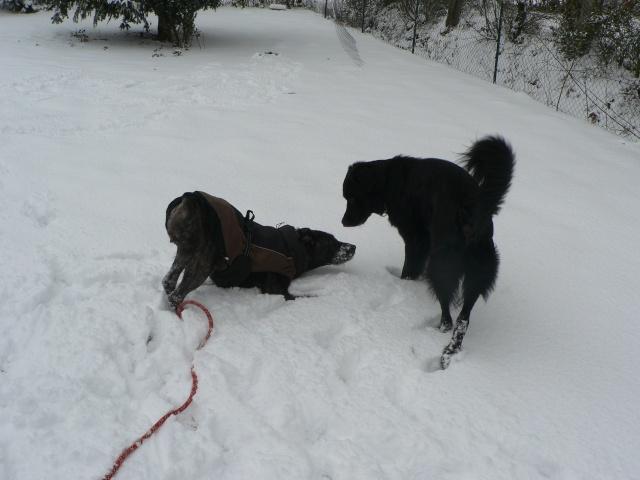 vive la neige !!  Jeux_d41