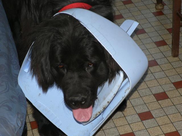 Le bêtisier de nos chiens - Page 6 Les_ba12