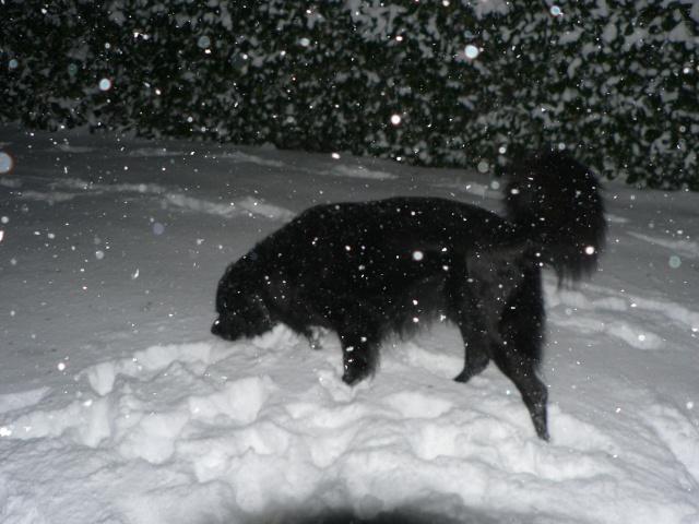 vive la neige !!  Neige_13