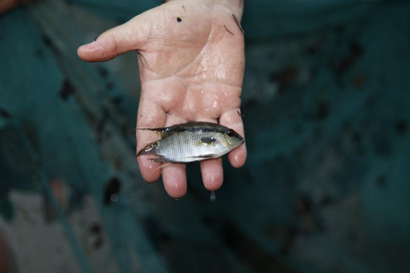 Voyage au Pérou (croisière aquario solidaire 2012)  - Page 2 _mg_0610