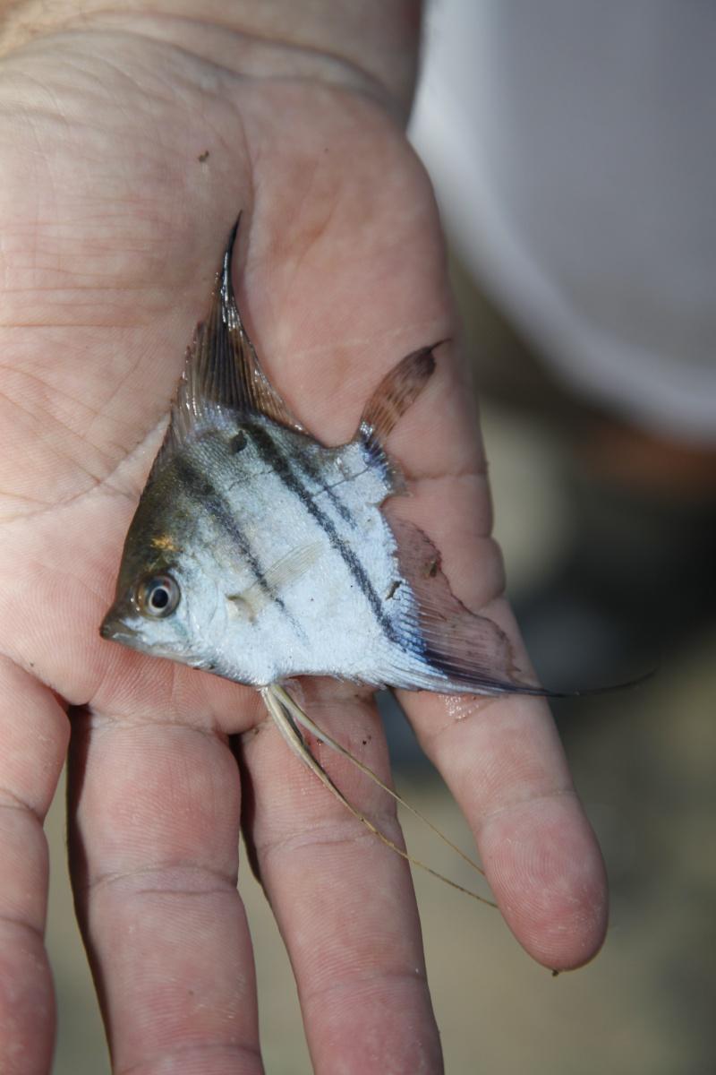 Voyage au Pérou (croisière aquario solidaire 2012)  - Page 2 _mg_0613