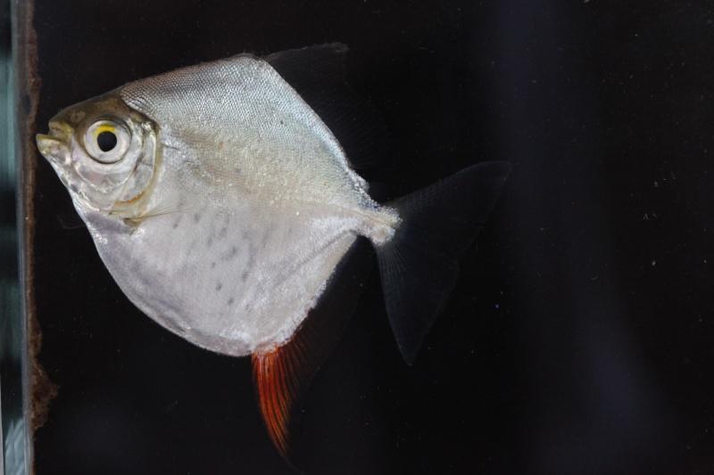 Voyage au Pérou (croisière aquario solidaire 2012)  - Page 2 _mg_0710