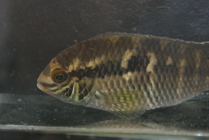 Voyage au Pérou (croisière aquario solidaire 2012)  - Page 2 Dsc06510