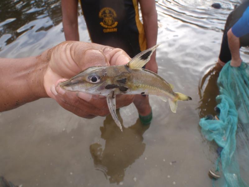 Voyage au Pérou (croisière aquario solidaire 2012)  - Page 2 Pa090210