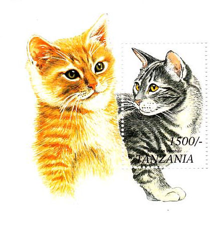Katzen 2008-110