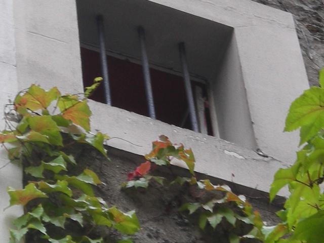 Au rebord des fenêtres Dscn7714