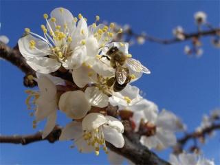 Prvi dan proljeća Cvijet10