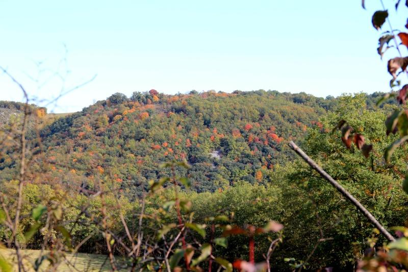 Les couleurs de l'automne... Img_3918