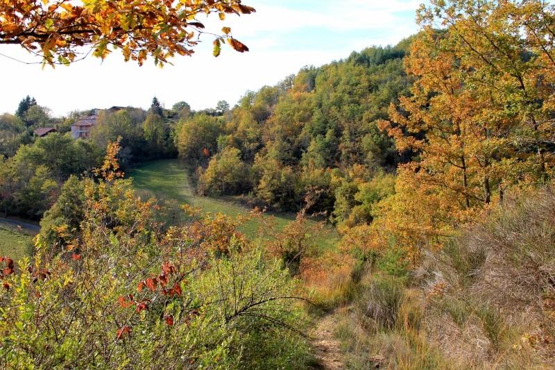 Les couleurs de l'automne... Img_3921