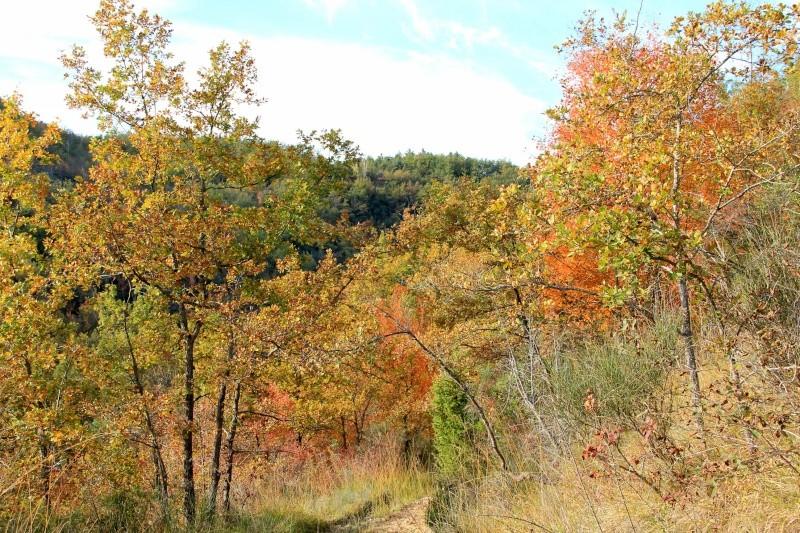 Les couleurs de l'automne... Img_3922