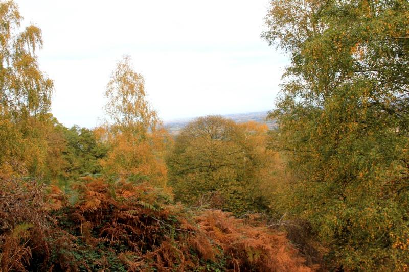 Les couleurs de l'automne... Img_3929