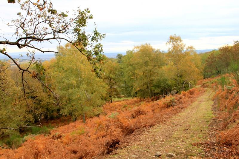 Les couleurs de l'automne... Img_3930