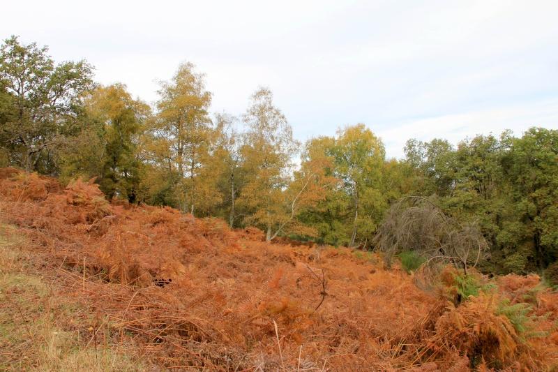 Les couleurs de l'automne... Img_3931