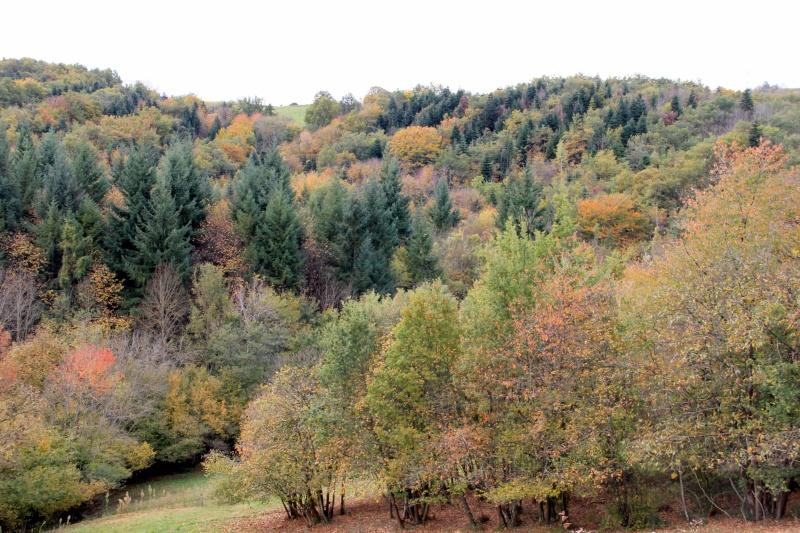 Les couleurs de l'automne... Img_3932
