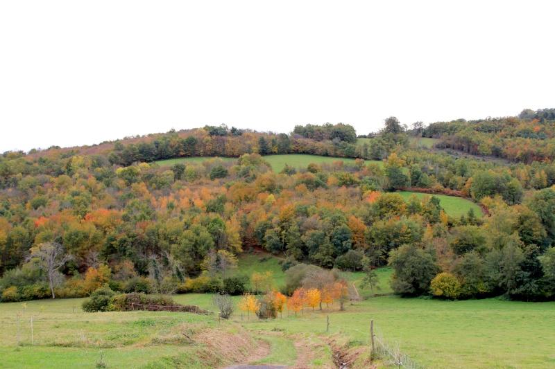 Les couleurs de l'automne... Img_3934