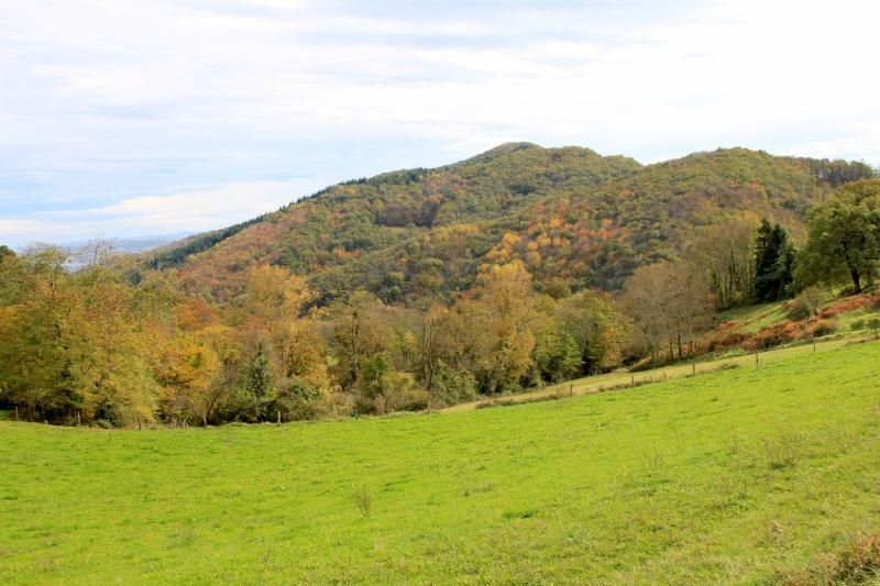 Les couleurs de l'automne... Img_3935