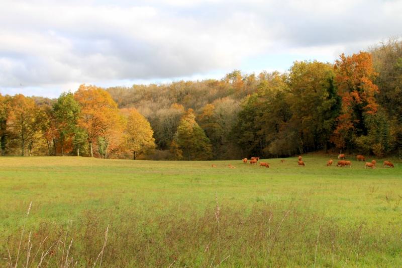 Les couleurs de l'automne... Img_3939