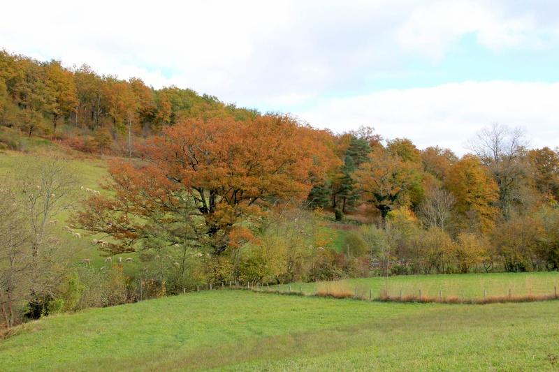 Les couleurs de l'automne... Img_3948