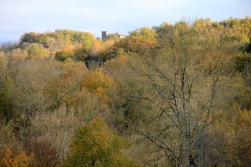 Les couleurs de l'automne... Img_4020