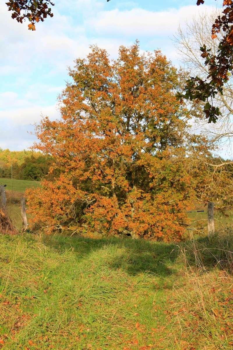 Les couleurs de l'automne... Img_4021