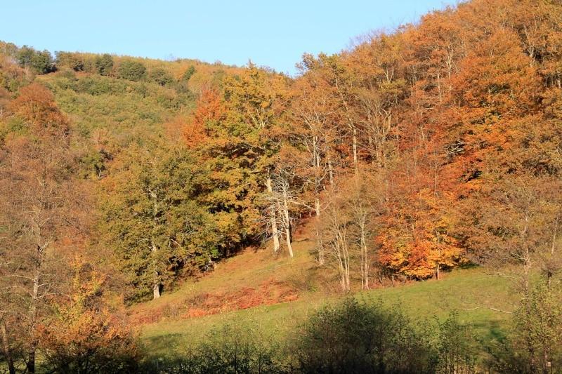 Les couleurs de l'automne... Img_4022