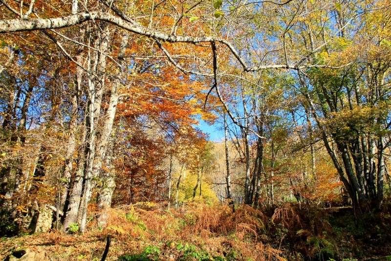 Les couleurs de l'automne... Img_4023