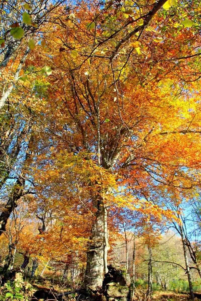 Les couleurs de l'automne... Img_4024