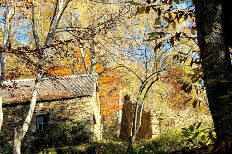 Les couleurs de l'automne... Img_4026