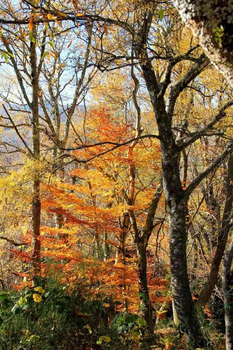 Les couleurs de l'automne... Img_4027