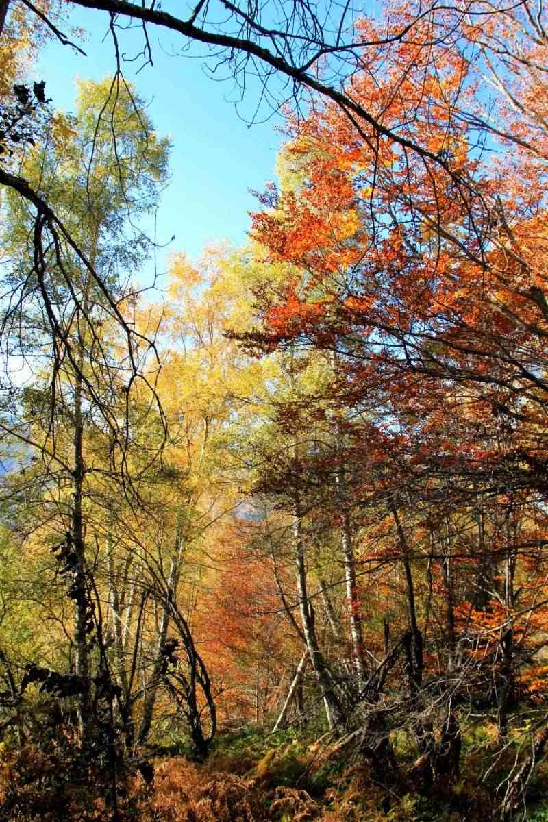 Les couleurs de l'automne... Img_4028