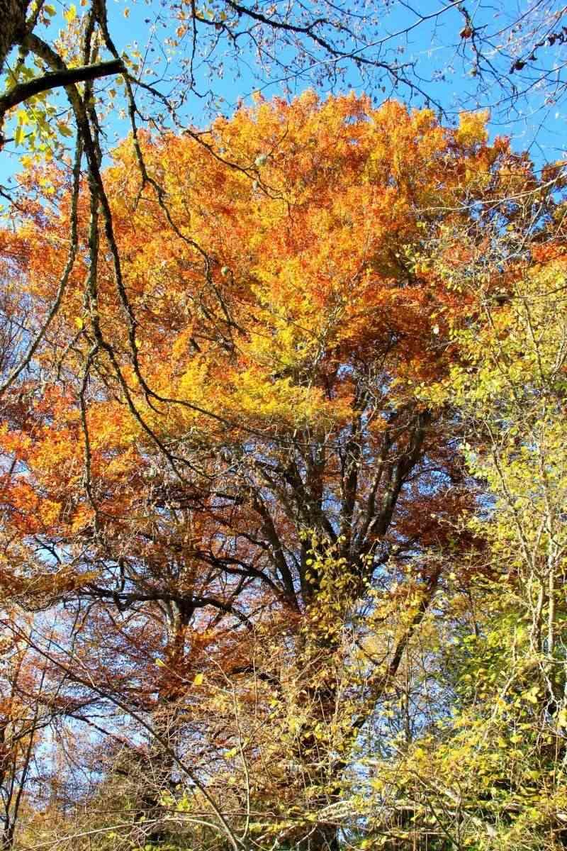 Les couleurs de l'automne... Img_4029