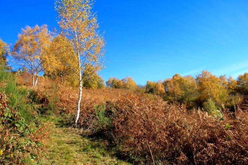 Les couleurs de l'automne... Img_4030