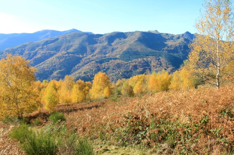 Les couleurs de l'automne... Img_4032