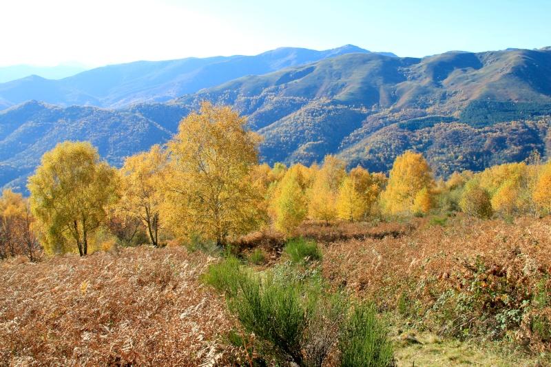 Les couleurs de l'automne... Img_4033
