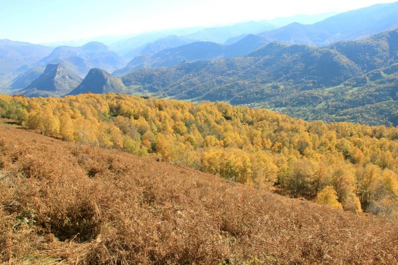 Les couleurs de l'automne... Img_4040