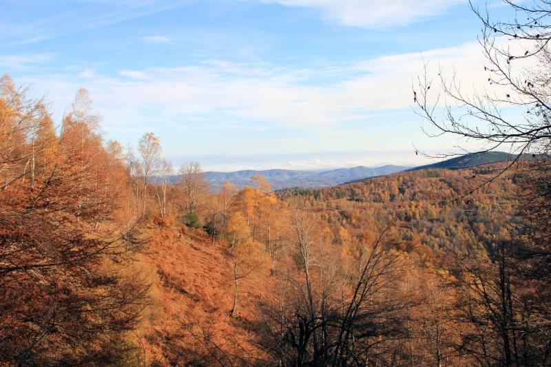 Les couleurs de l'automne... Img_4042