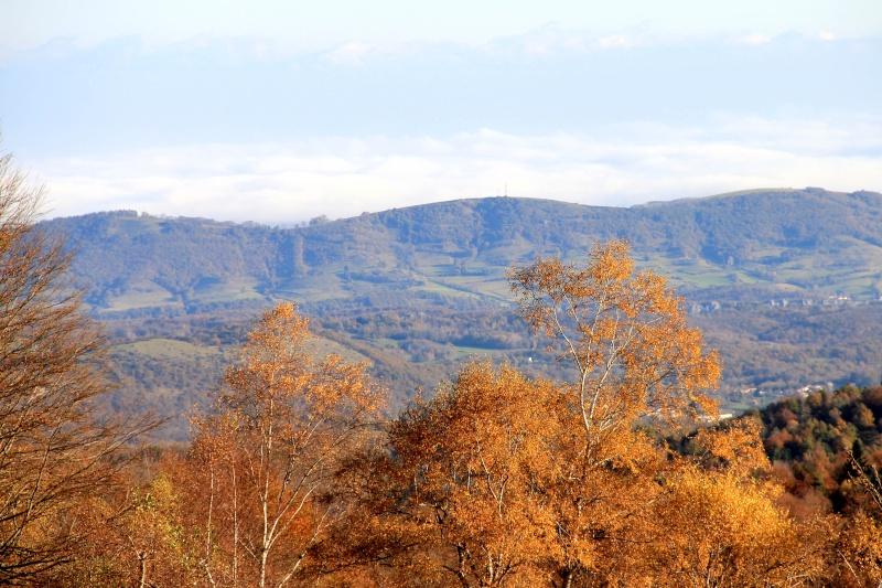 Les couleurs de l'automne... Img_4043