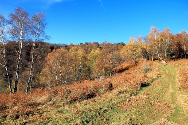 Les couleurs de l'automne... Img_4044