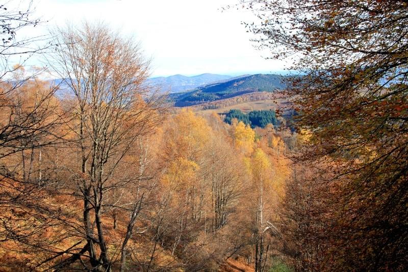 Les couleurs de l'automne... Img_4046